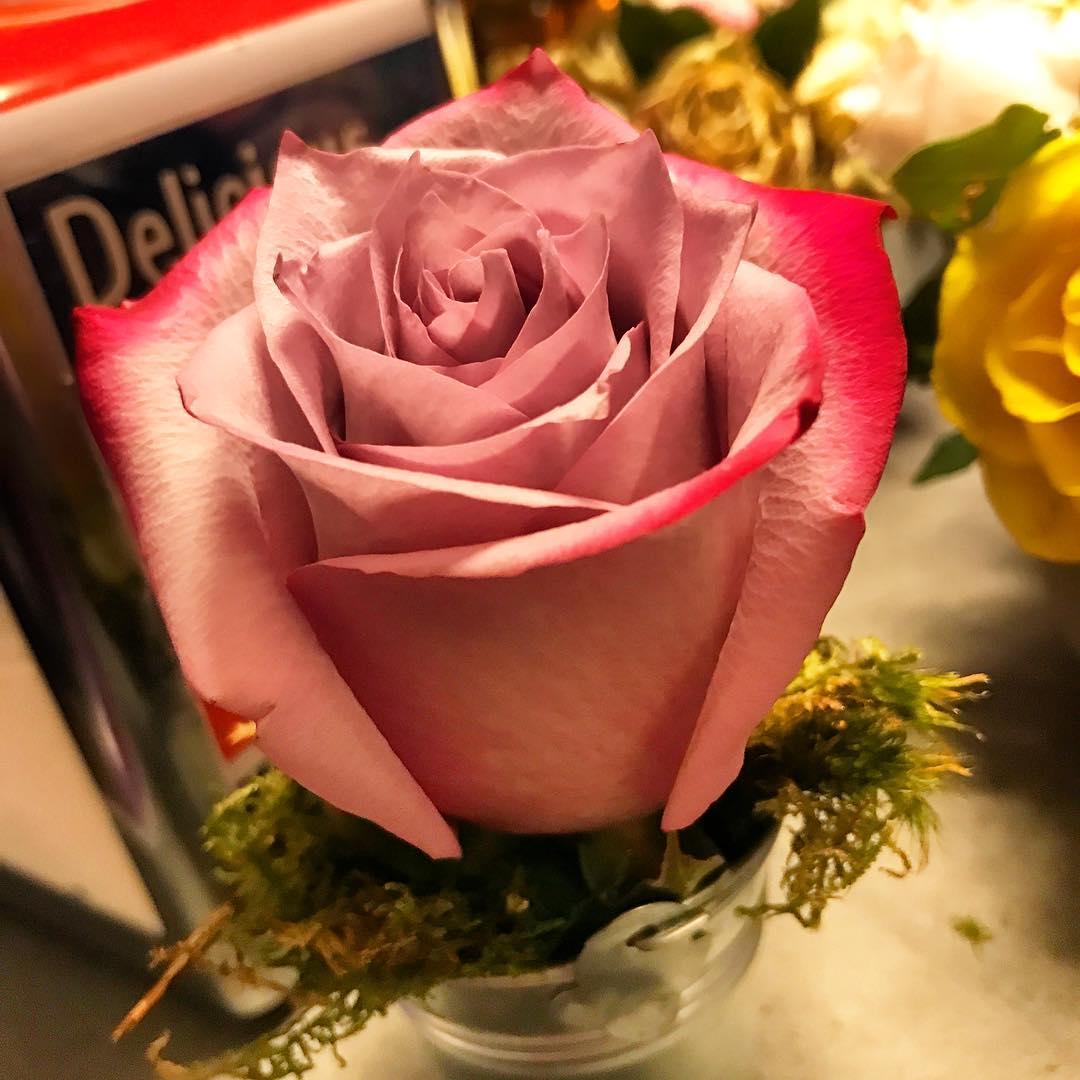 Les roses du samedi 🌳🌞 ️