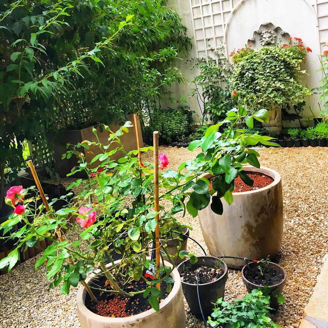 Dans le petit jardin  🌳🌞 ️