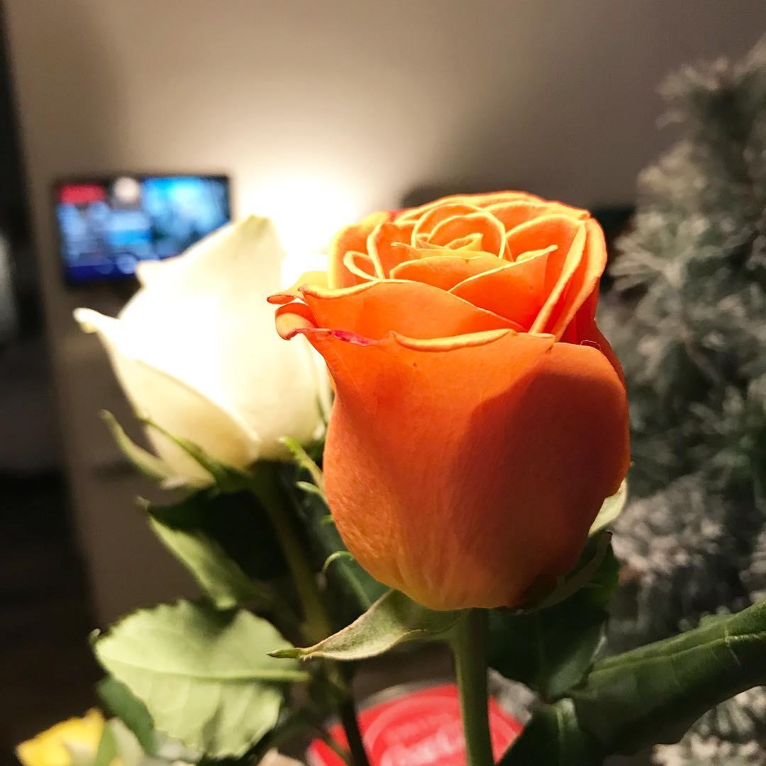 Tendance 2018 ! Les roses de la nouvelle année 🌳🌞 ️