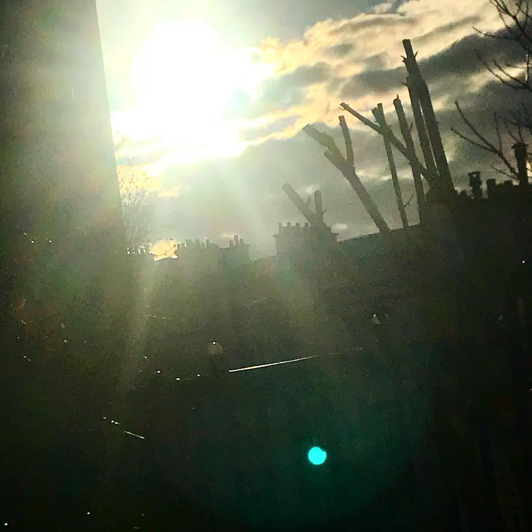 Premier rayon de soleil de l'année 🌳🌞 ️ .