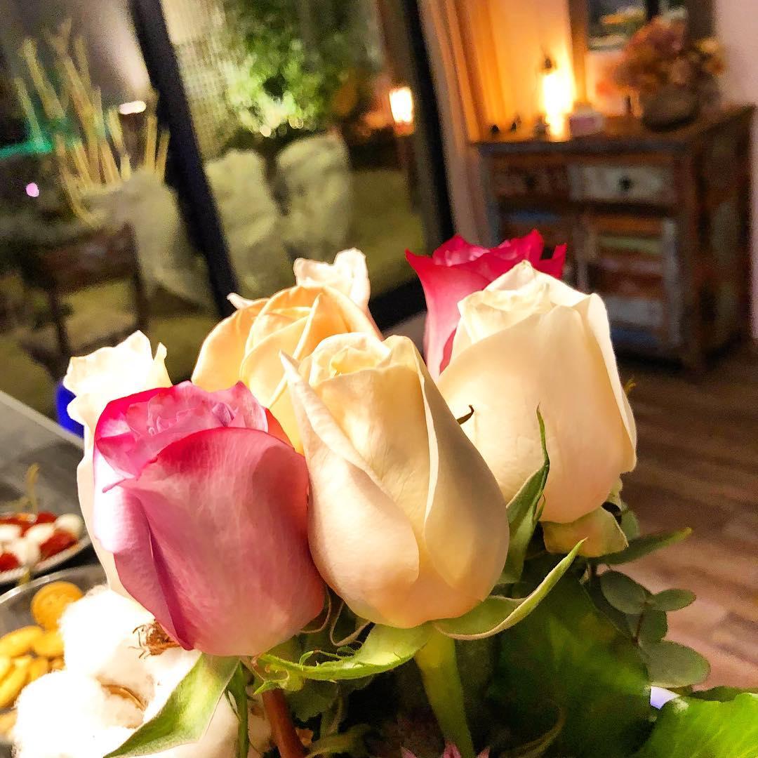 Les roses de la maison 🌳🌞 ️