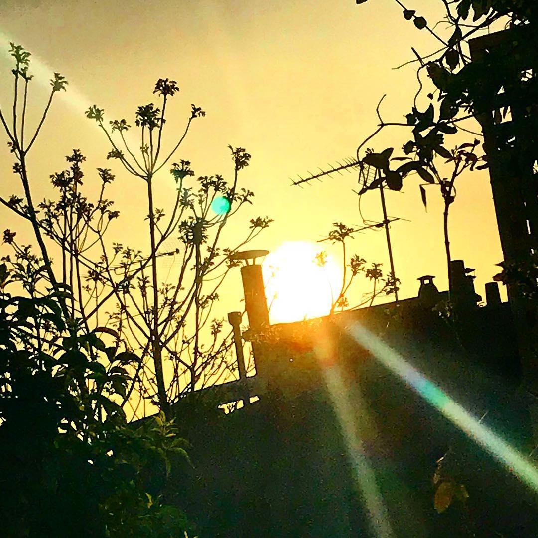 Premier coucher de soleil de l'année ️ 🌳🌞 ️