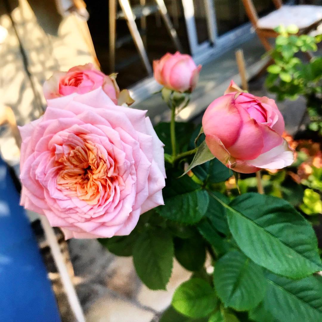 :  nouvelles dans le petit jardin  🌳🌞 ️