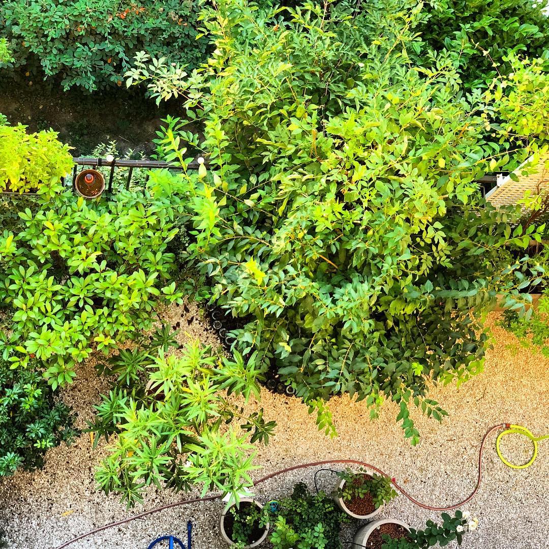Dans les petit jardin  🌳🌞 ️
