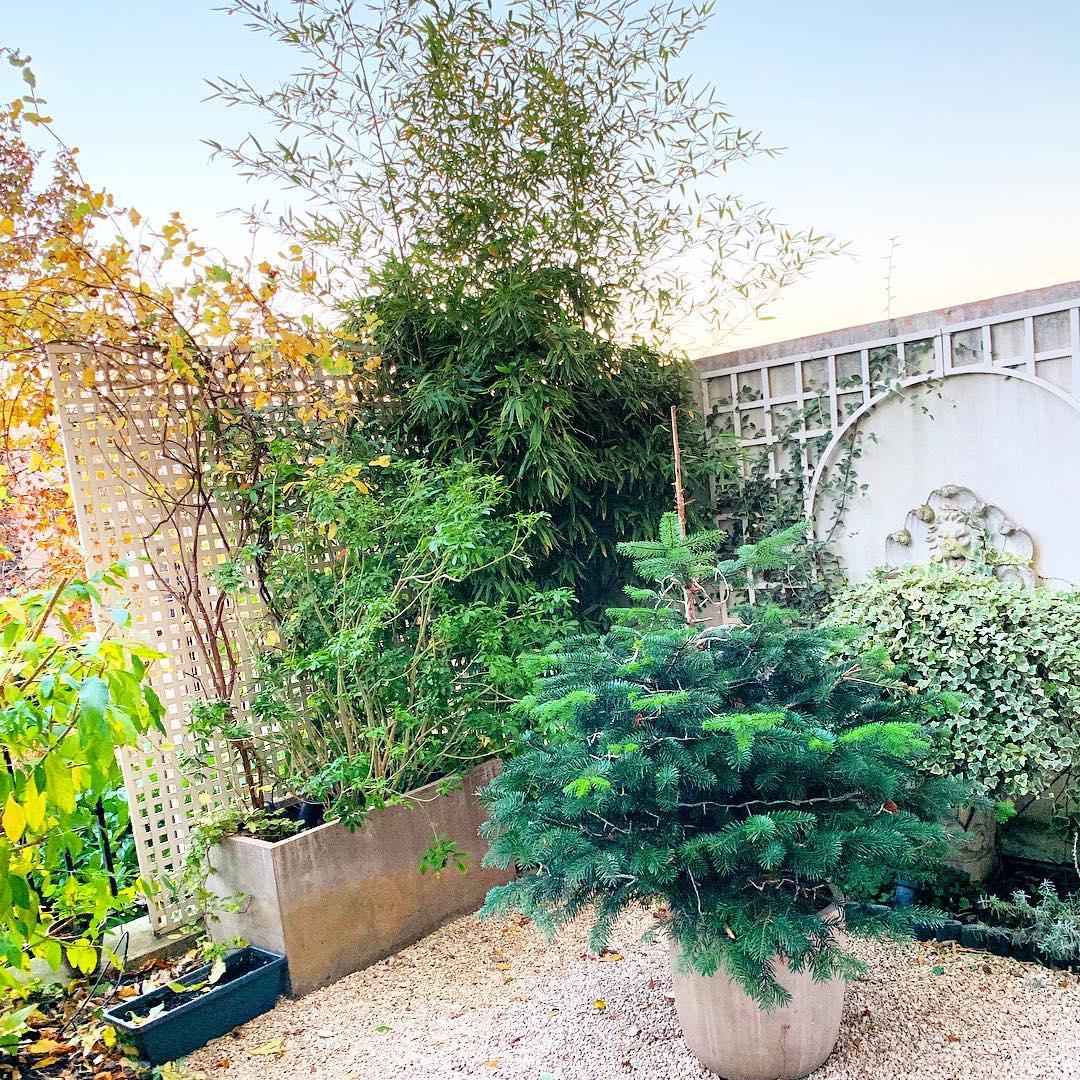 Des nouvelles du petit jardin  🌳🌞 ️ .