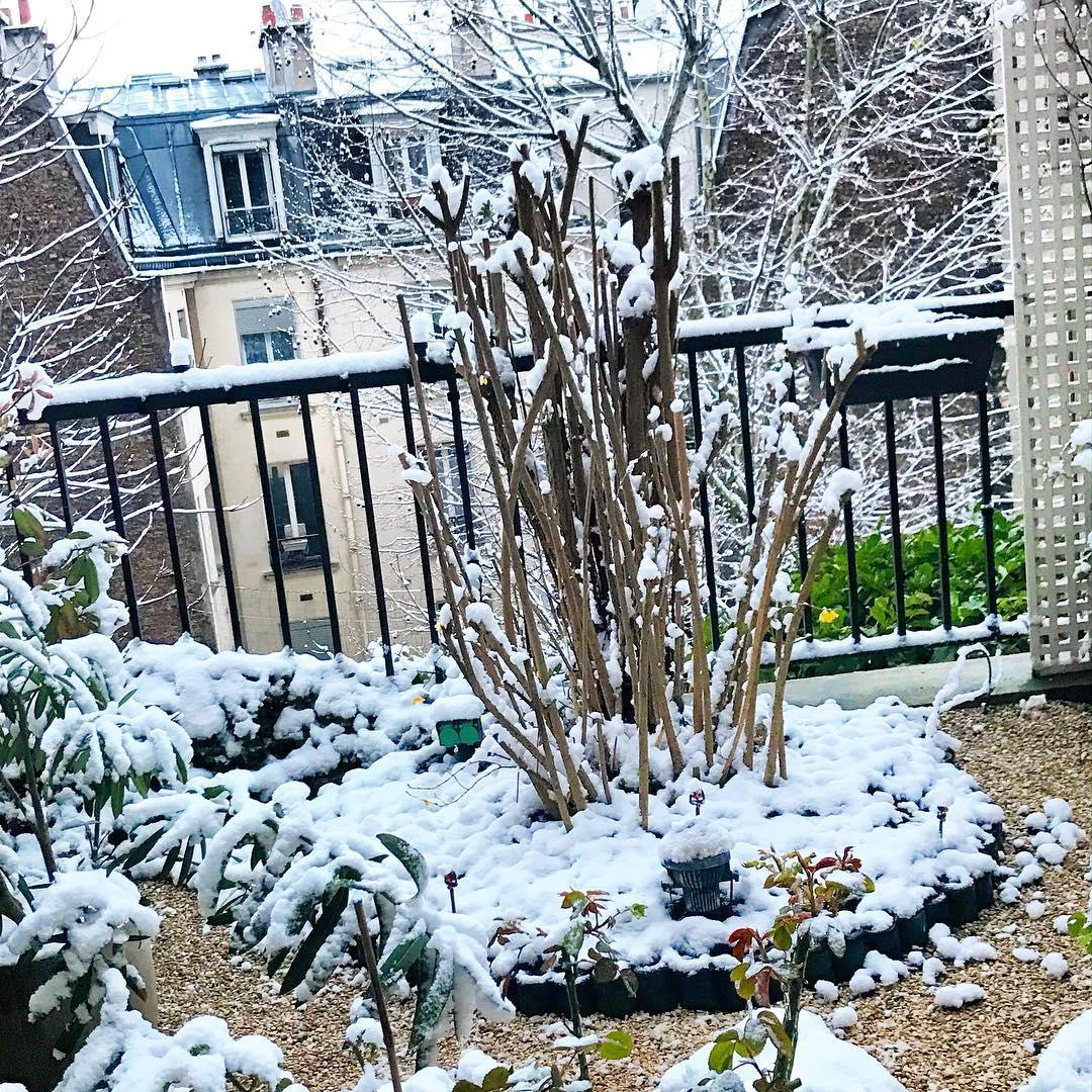 Le petit jardin  sous la neige 🌳🌞 ️  @mairie18