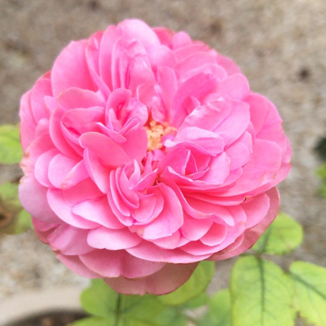 Bientôt le printemps dans le petit jardin  🌳🌞 ️  @mairie18