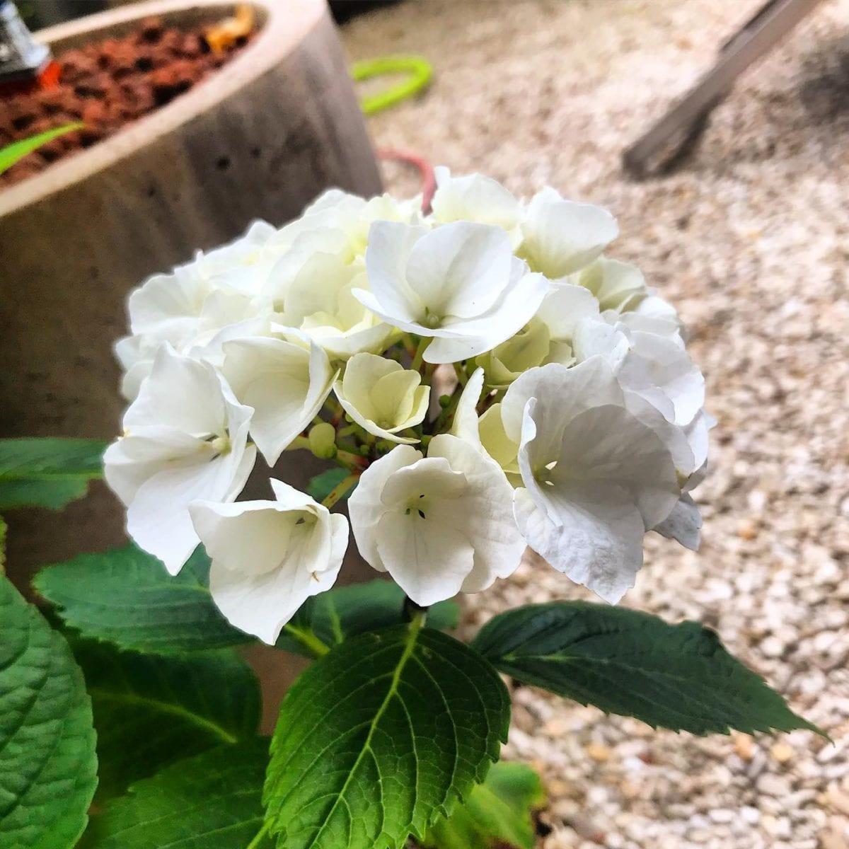Les fleurs du petit jardin  🌳🌞 ️ @mairie18