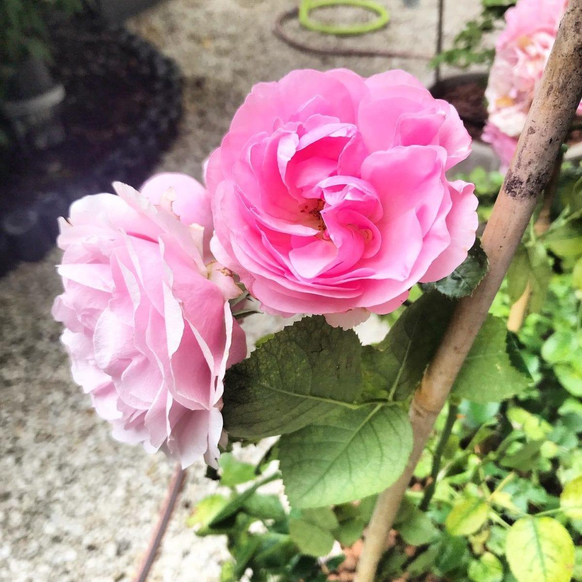 Petit jardin  les fleurs 🌳🌞 ️ @mairie18