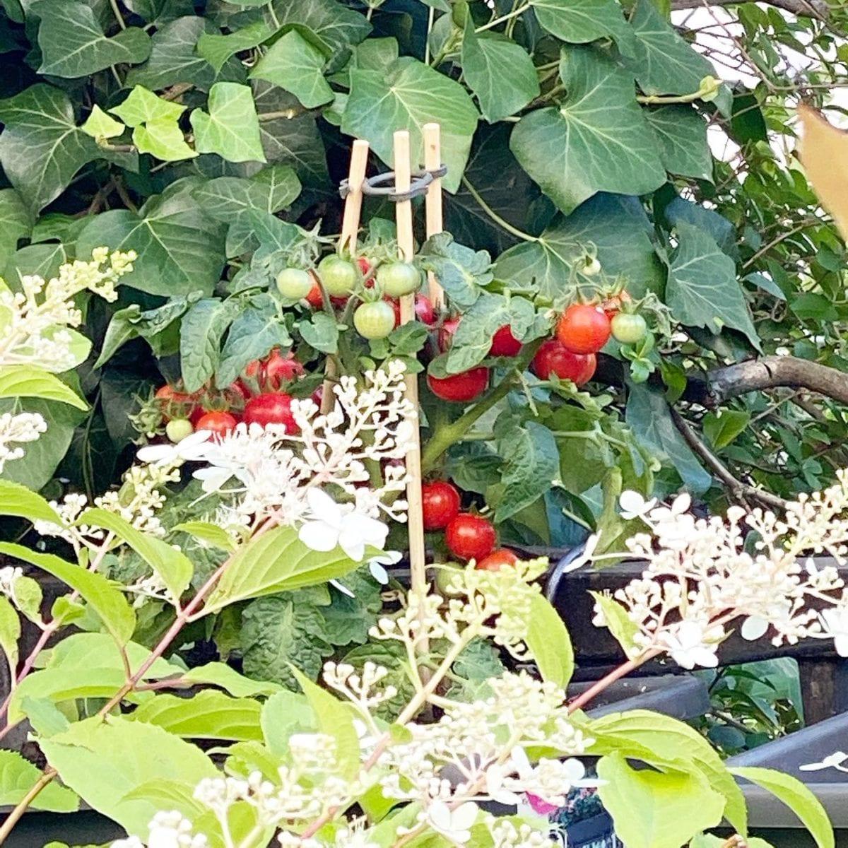 Dans le petit jardin  🌳🌞 ️ @mairie18